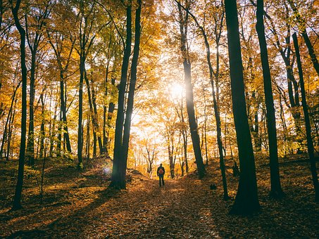 Trees, Plant, Path, Autumn, Sunlight, Forest, Morning
