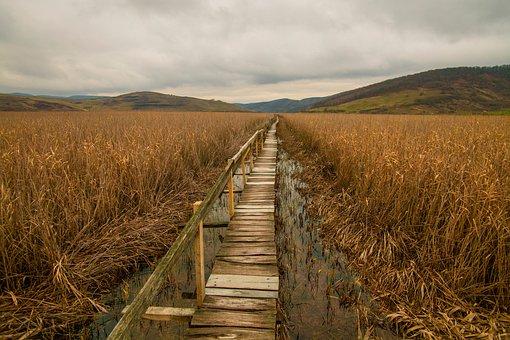 Wooden, Bridge, Path, Grass, Agriculture, Plant, Field