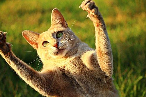 Cat, Mieze, Paw, Claw, Play, Tiger Cat, Mackerel, Tiger
