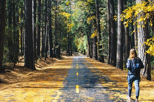 Road, Tree, Plant, Forest, Nature, Leaf, Fall, Autumn