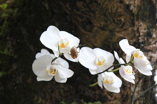 Flower, Clear The Net, Zen