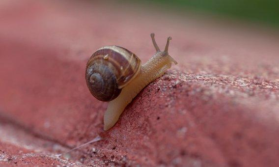 Gastropods, Snail, Slugs, Crawling, Nature