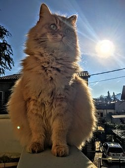 Cat, Animal, Pet, Outside, Sunlight, Sunshine, Sunrise