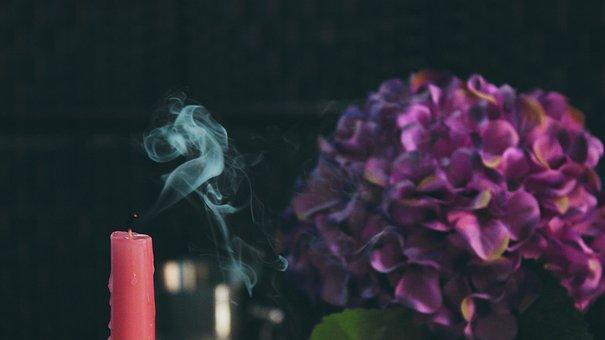 Pink, Candle, Violet, Flower, Blur, Display
