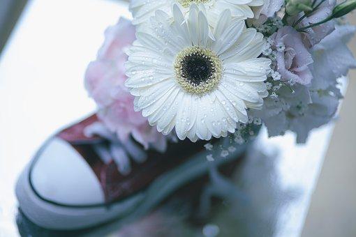 White, Petal, Flowers, Shoe, Footwear, Waterdrops