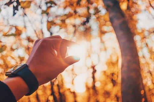 Hand, Watch, Sunlight, Sunshine, Sunrise, Nature, Plant