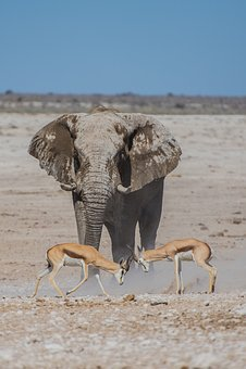 Deer, Horn, Elephant, Mammal, Animal, Wildlife, Nature