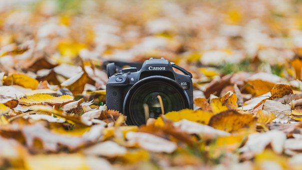Canon, Lens, Camera, Photography, Portrait, Leaf, Fall
