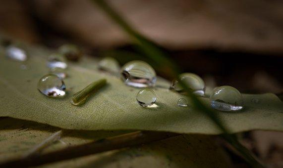 Leaf, Outdoor, Wet, Water, Raindrops, Blur