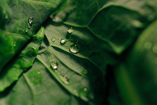 Green, Leaf, Wet, Water, Raindrops, Blur
