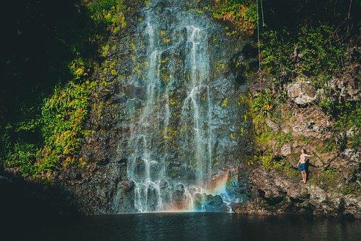 Waterfall, Green, Grass, Moss, Tree, Plant, Nature