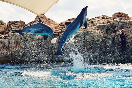 Sea, Ocean, Blue, Water, Nature, Dolphin, Fish, Aquatic