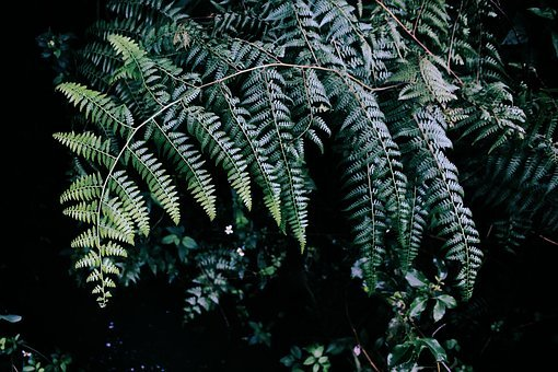 Tree, Plant, Green, Leaves, Grass, Forest, Ferns