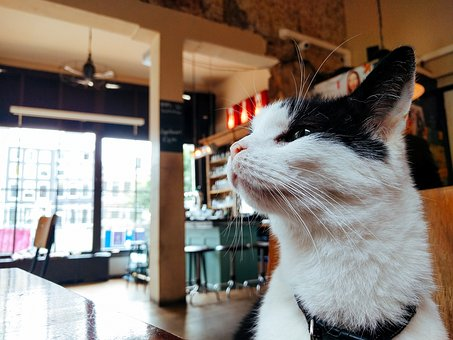 House, Cat, Kitten, Pet, Animal, Table, Chairs, Bar