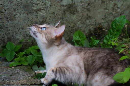 Cat, Bengal, Pet, Wildcat, Big Cat Asylum, Play