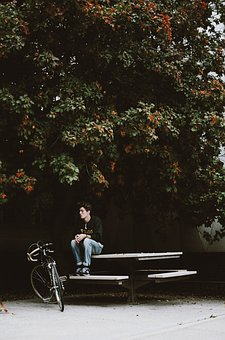 Tree, Plant, Outside, Table, Bench, Bike, Bicycle