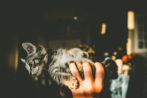 Hand, House, Kitten, Cat, Pet, Animal