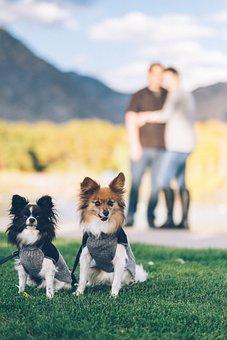 Dogs, Puppy, Pet, Playground, Green, Grass