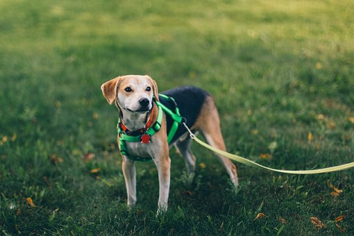 Dog, Animal, Pet, Puppy, Green, Grass