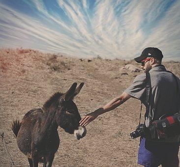 Dunkey, Horse, Animal, People, Man, Photographer