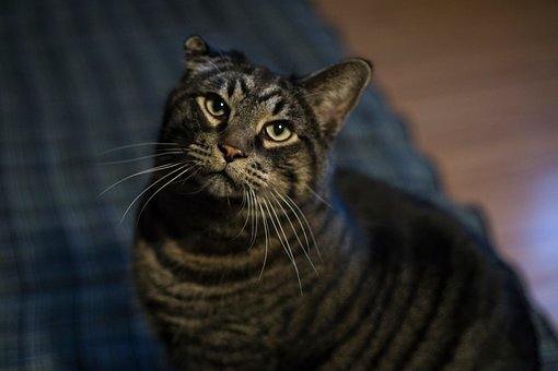 House, Floor, Blanket, Cat, Kitten, Animal, Pet
