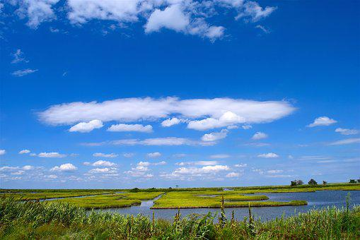 Marsh, Water, Sky, Grass, Nature, Landscape, Green