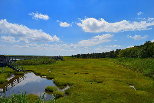 Marsh, Estuary, Water, Grass, Nature, Landscape, Green