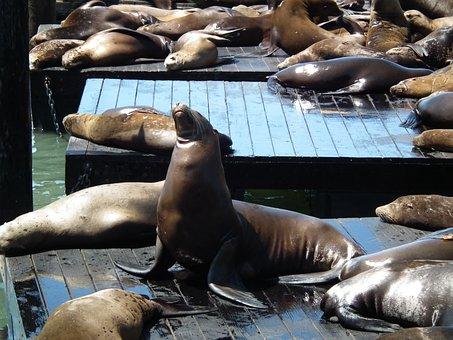 Piere 39, Usa, Sea Lions
