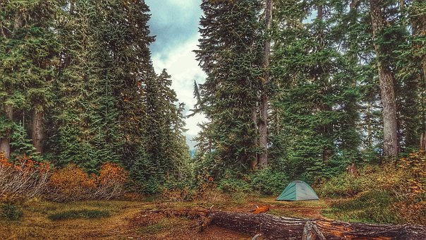 Trees, Woods, Plants, Nature, Forest, Outdoor