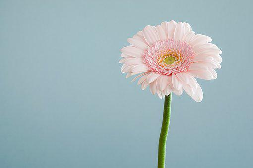 Flowers, Nature, Blossoms, Stems, Stalk, Pink