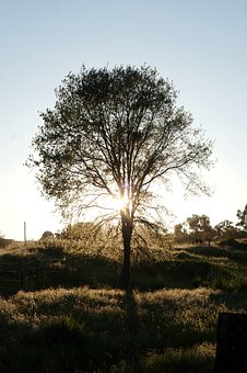 Tree, Grass, Nature, Sky, Sunlight, Sunrise, Sunset