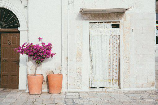Door, Wall, Flower, Pot, Curtain, Room, House, Plant