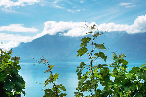 Green, Plants, Vine, Nature, Sky, Clouds, Mountain