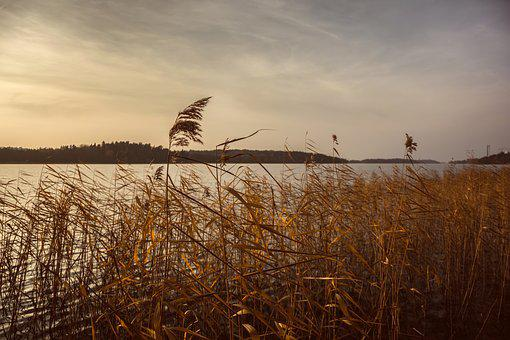 Nature, Grass, Stems, Stalks, Sway, Wind, Water, River