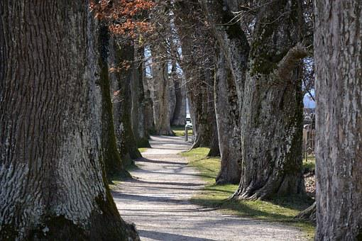 Tree Lined Avenue, Avenue, Trees, Away, Nature, Oak