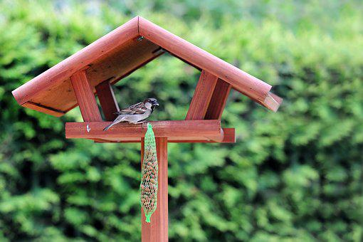 Bird, Bird Seed, Nature, Animals, Feed, Feeding, Peck