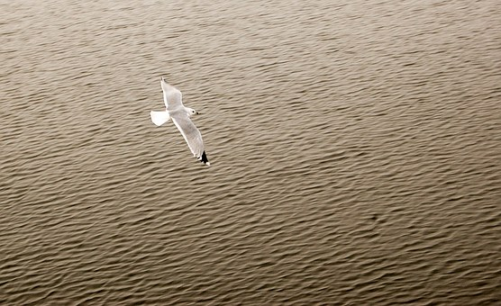 Animal, Bird, Bird Life, Carefree, Color, Day, Feathers