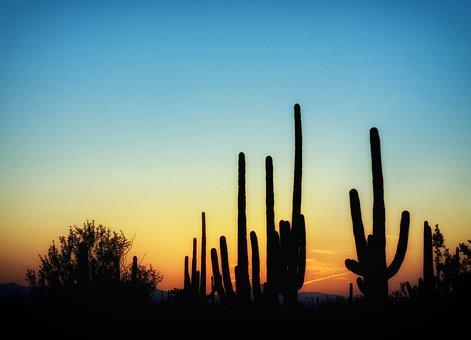 Arizona, Cactus, Cacti, Saguaro, Sunset, Sky, Clouds