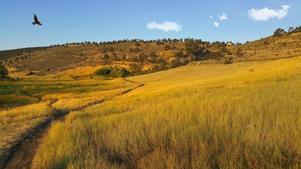 Pineridge Natural Area, Hawk, Flight, Freedom, Sky, Fly