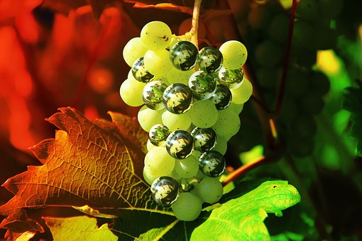 Grapes, Digitally Altered, Photoshop, Fruit