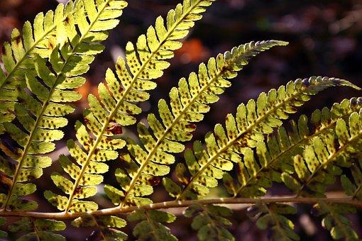 Fern, Green, Sun, Bright, Leaves, Plant, Nature