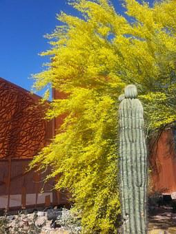 Saguaro, Ironwood, Arizona, Cactus, Rust, Trees, Desert