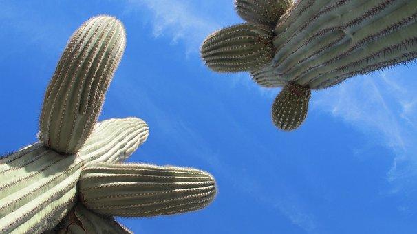 Saguaro, Cactus, Desert, Tucson, Arizona