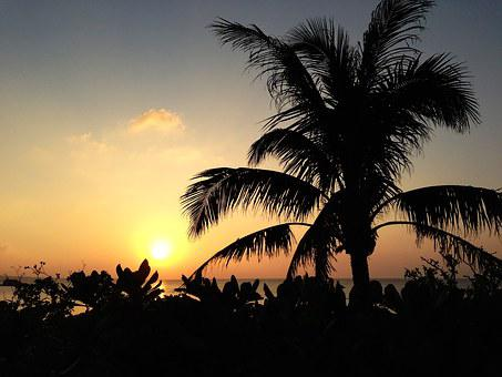 Sunset, Plant, Beach, Sea, Okinawa, Palm Trees, Japan