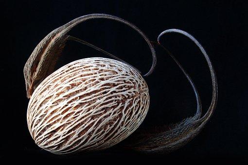 Seed, Worn, Lines, Close, Macro, Shadow, Texture