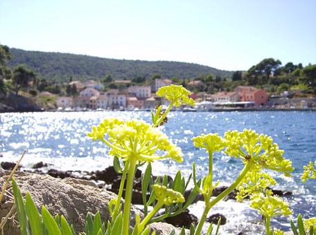 Flower, Sea, Beach, By The Sea, Summer, Back Light