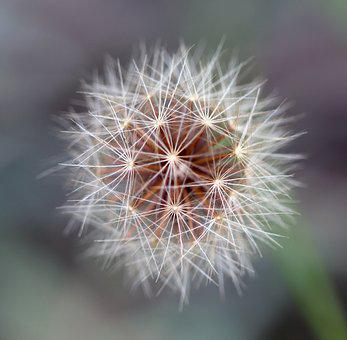 Seed Head, Summer, Seed, Plant, Nature, Floral, Weed
