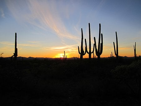 Arizona, Sunset, Cacti, Desert, Landscape, Southwest