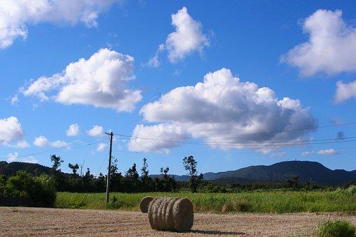 Grass, Soil Mechanics, Utility Pole, Plow, Cloud