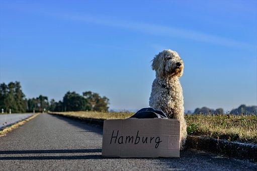 Hitcher, Hitch-hike, Dog, Road, Travel, Wanderer